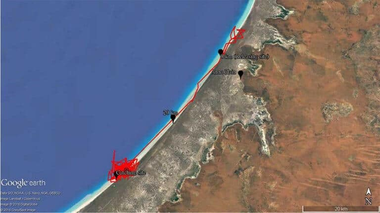 Satellite map of 80 Mile Beach
