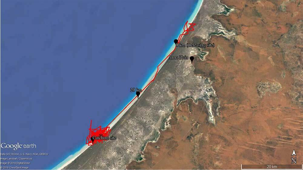 Satellite map of 80 Mile Beach