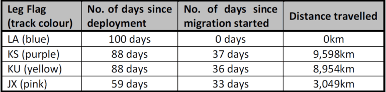 Migration summary table - Whimbrels
