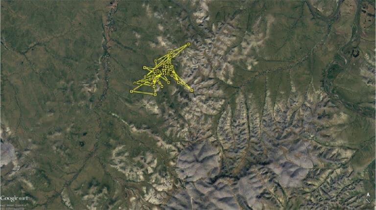 Movement of KU around nesting location - Week 2: 14 Jun to 19 Jun