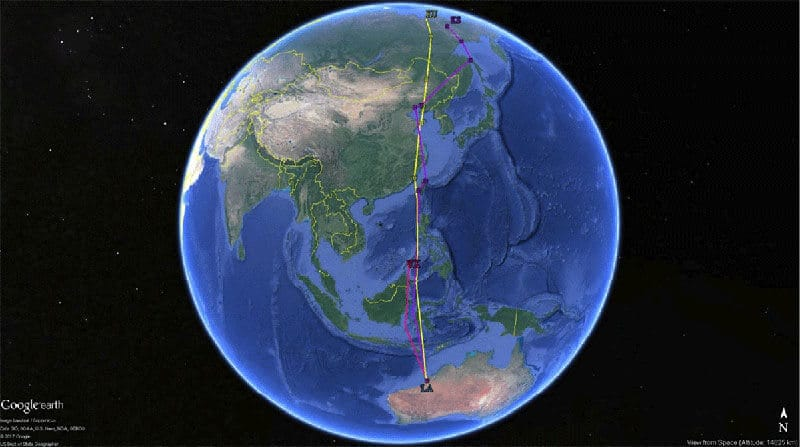 Migration tracks of Whimbrels