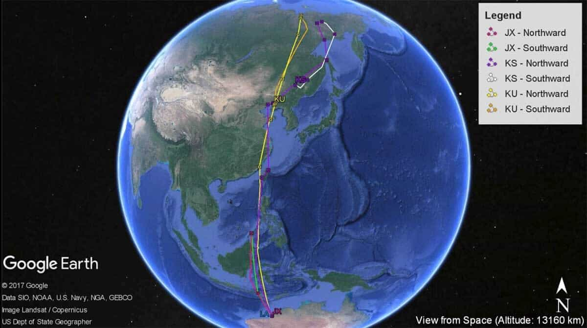170812 Whimbrel Migration tracks
