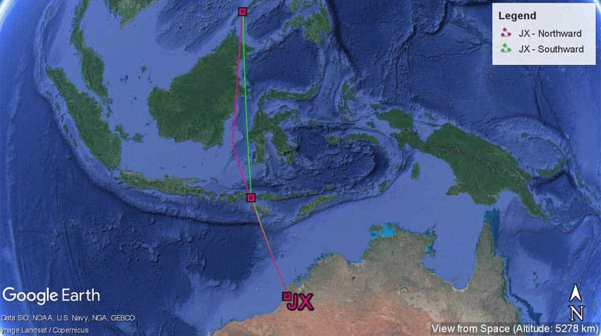 Complete migration path of whimbrel JX