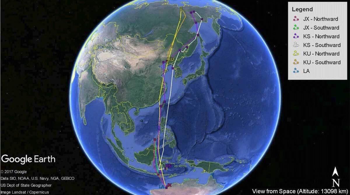 170925 Whimbrel migration tracks