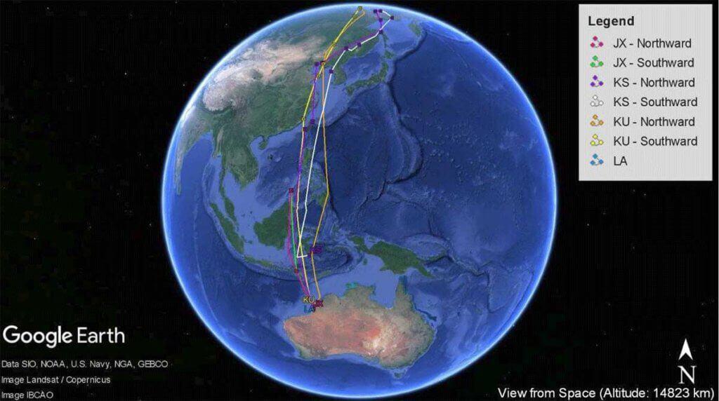 171106 Whimbrel migration tracks