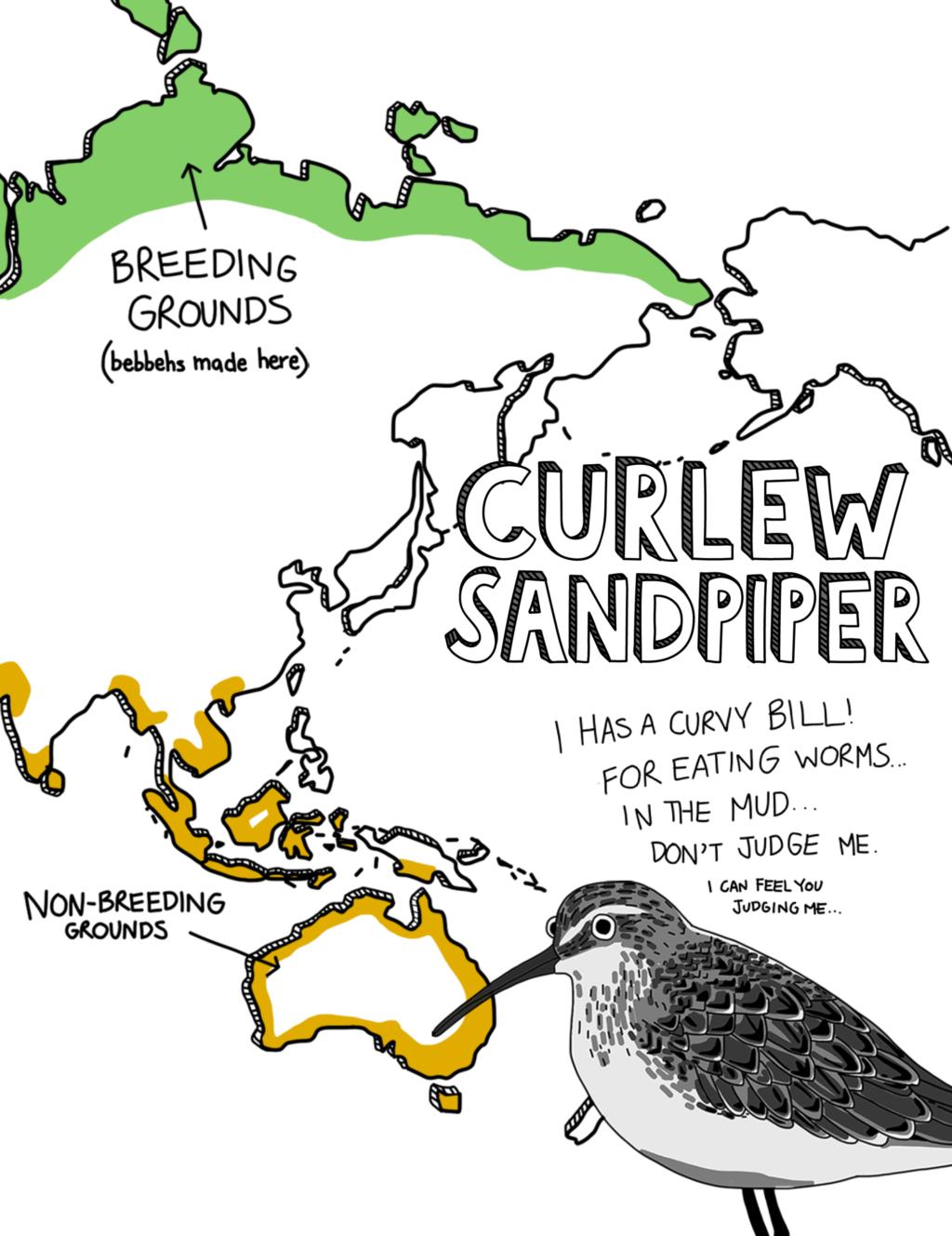 Curlew Sandpiper map