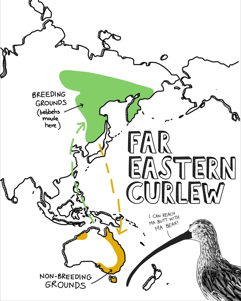Far Eastern Curlew map