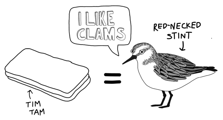 Black and white cartoon comparing the size of a Red-necked Stint to a Tim Tam biscuit
