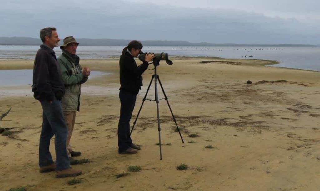 Shorebird surveys at Albany