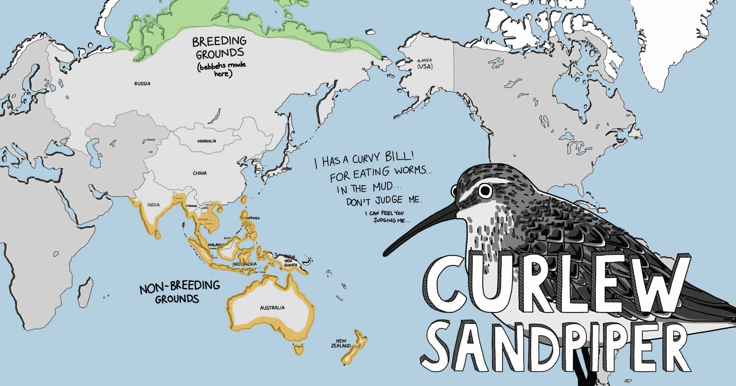 Cartoon world map showing distribution of the Curlew Sandpiper