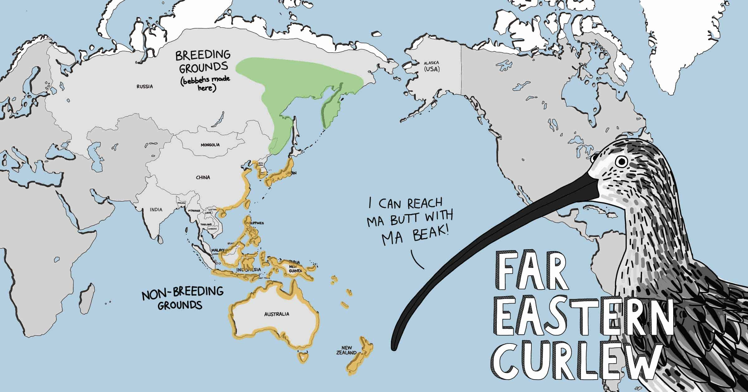 Cartoon world map showing distribution of the Far Eastern Curlew