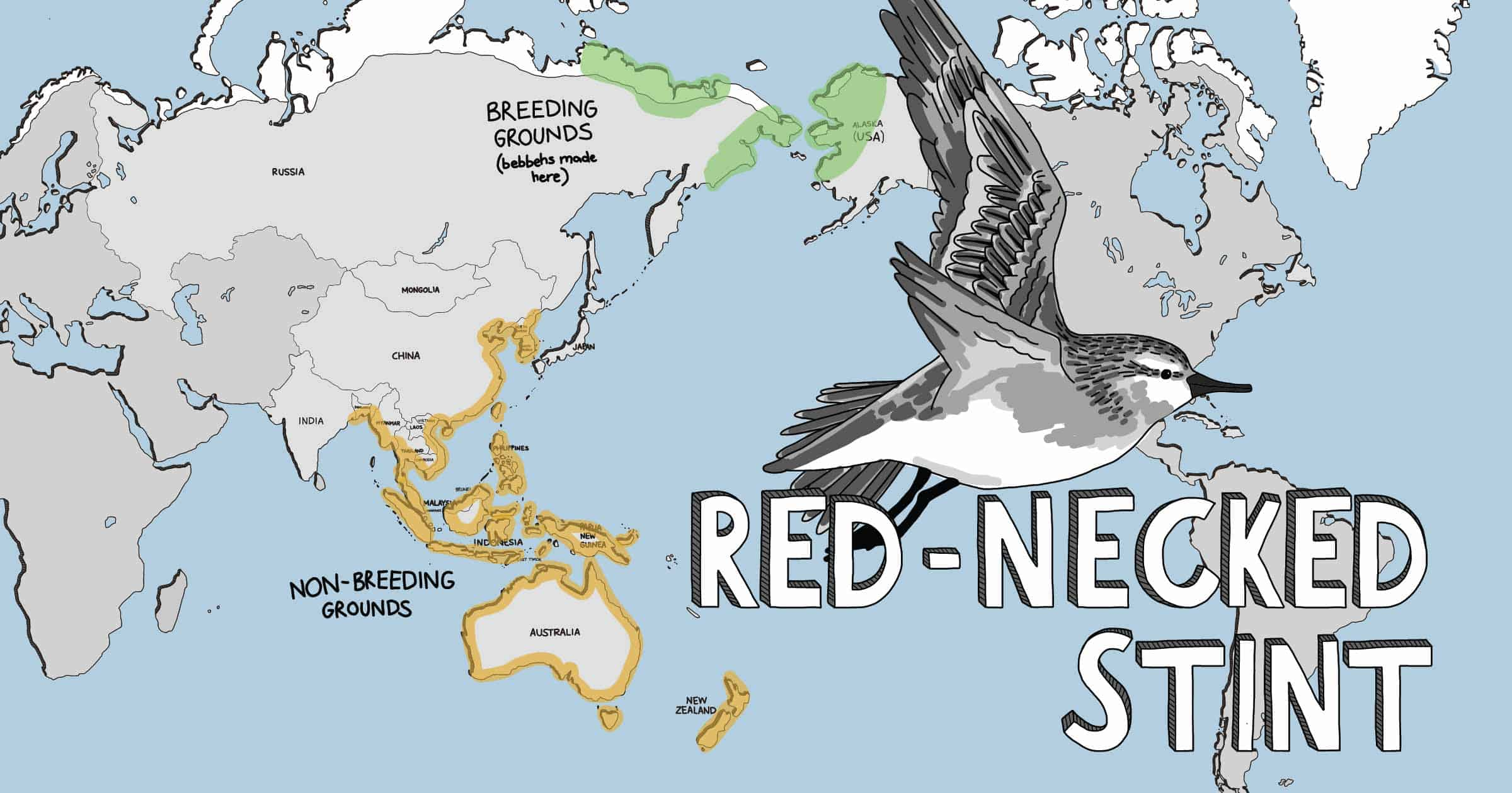 Cartoon world map showing distribution of the Red-necked Stint