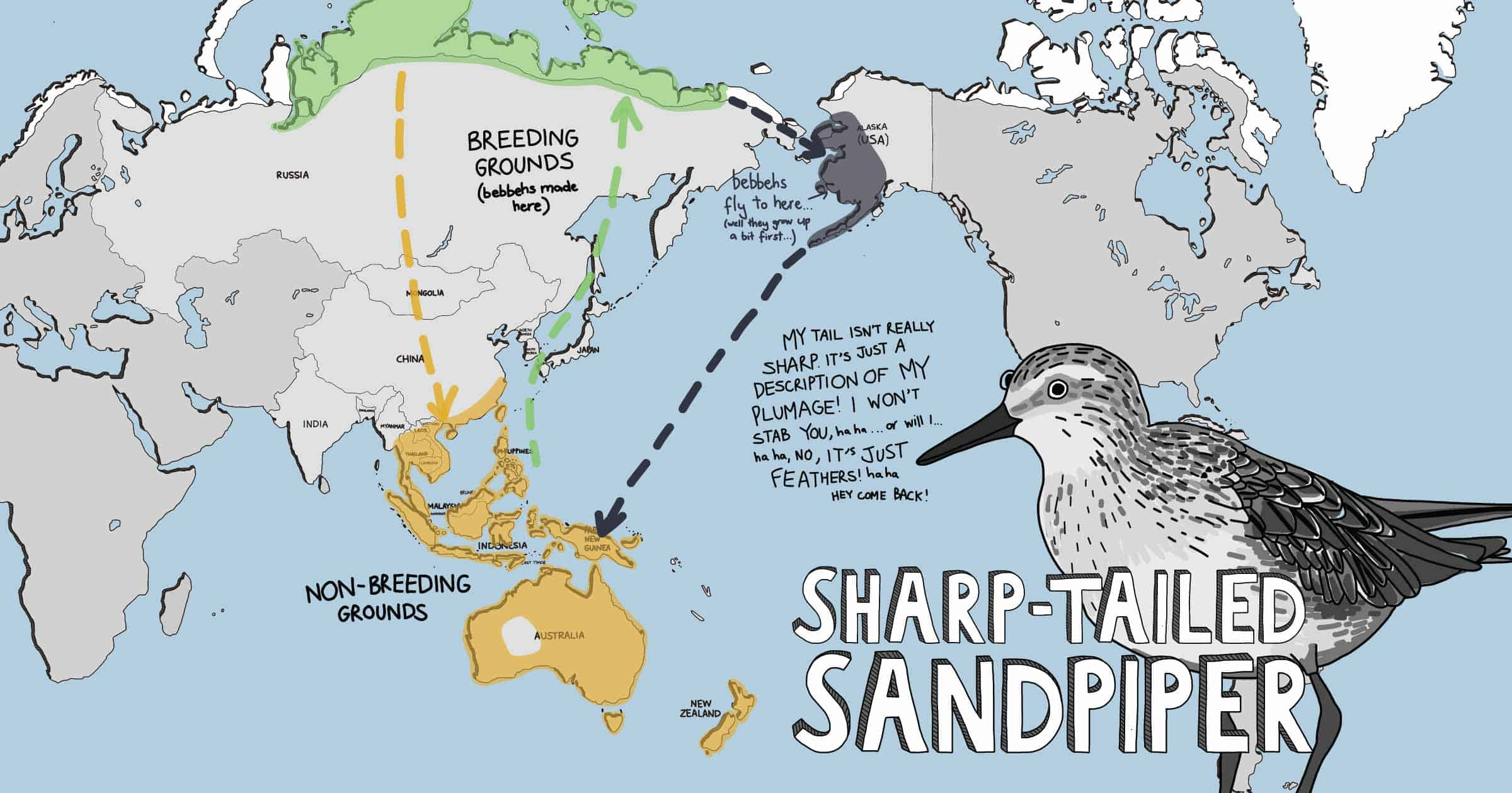 Cartoon world map showing distribution of the Sharp-tailed Sandpiper