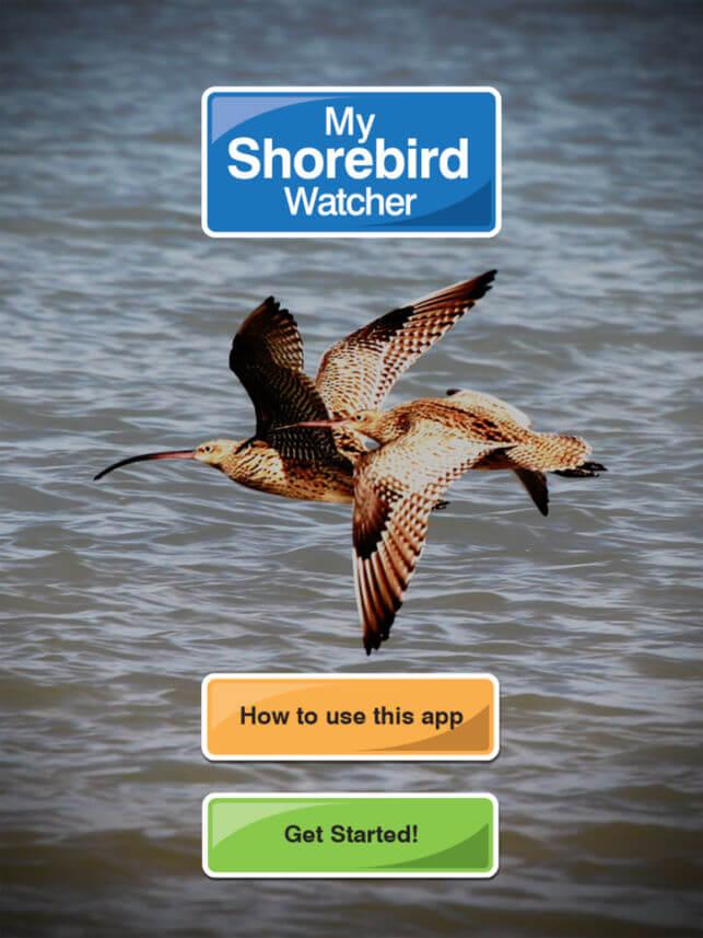 My Shorebird Watcher