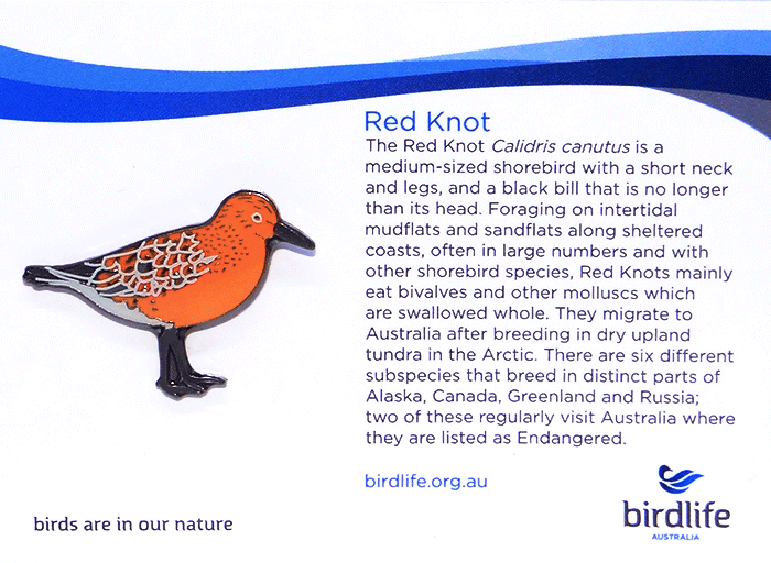 Red knot pin
