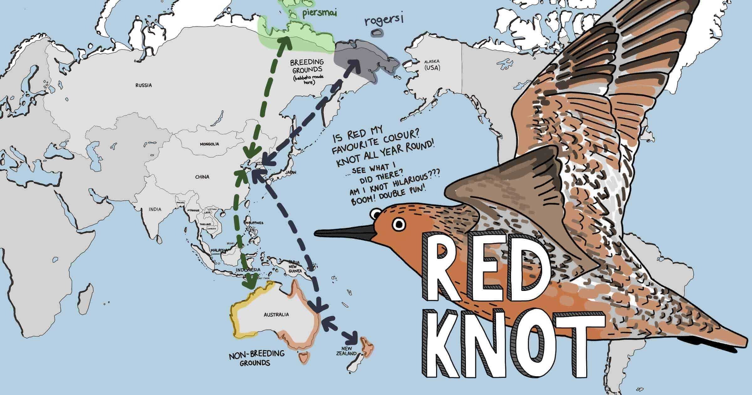 Meet The Shorebirds distribution map - Red Knot
