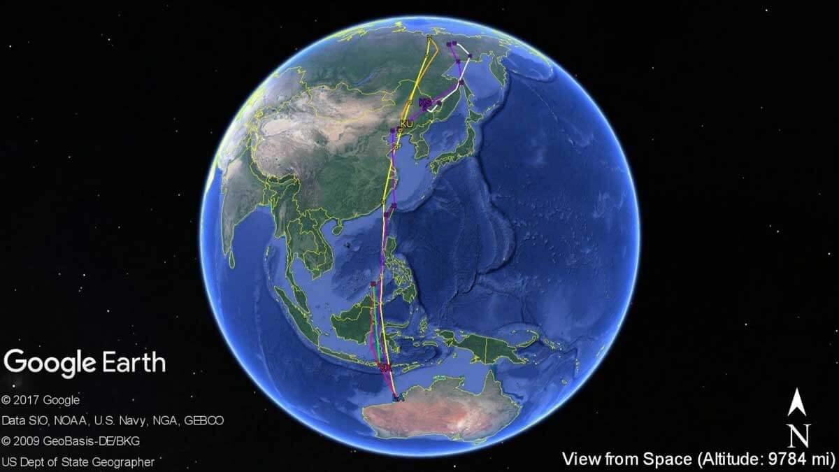 170811 Migration tracks of satellite tagged whimbrels