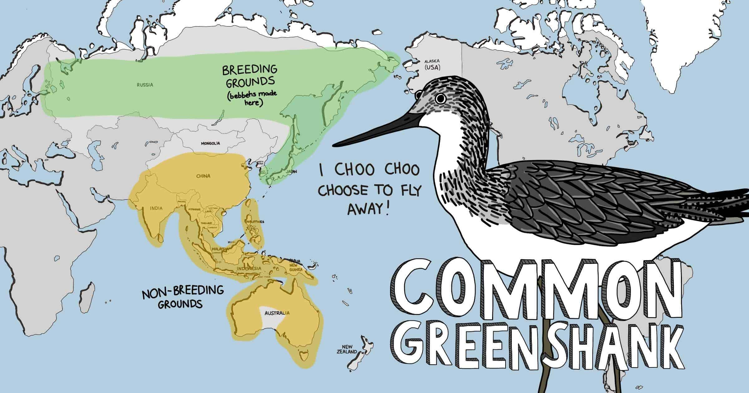 Meet The Shorebirds distribution map - Common Greenshank