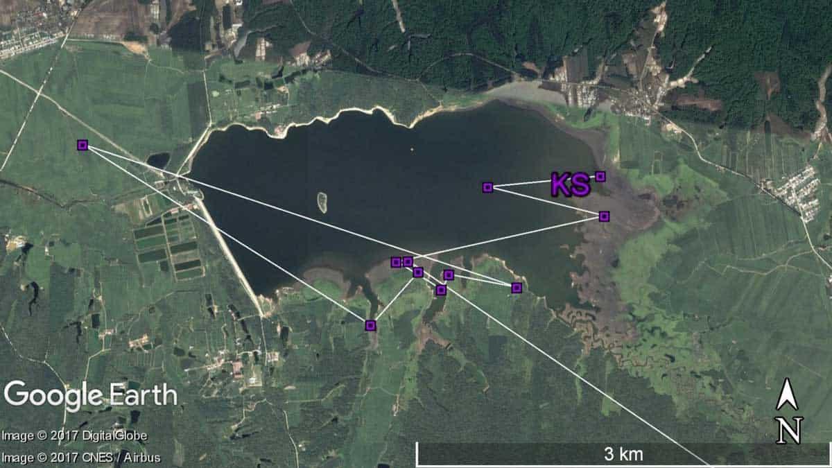 Whimbrel KS's southward migration path