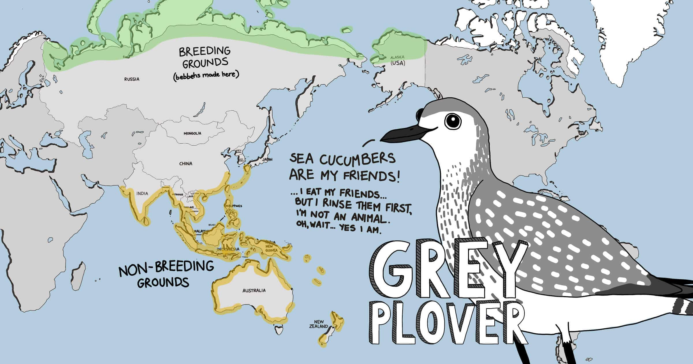 Meet The Shorbirds distribution map - Grey Plover