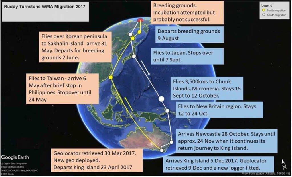 Ruddy Turnstone WMA migraton track