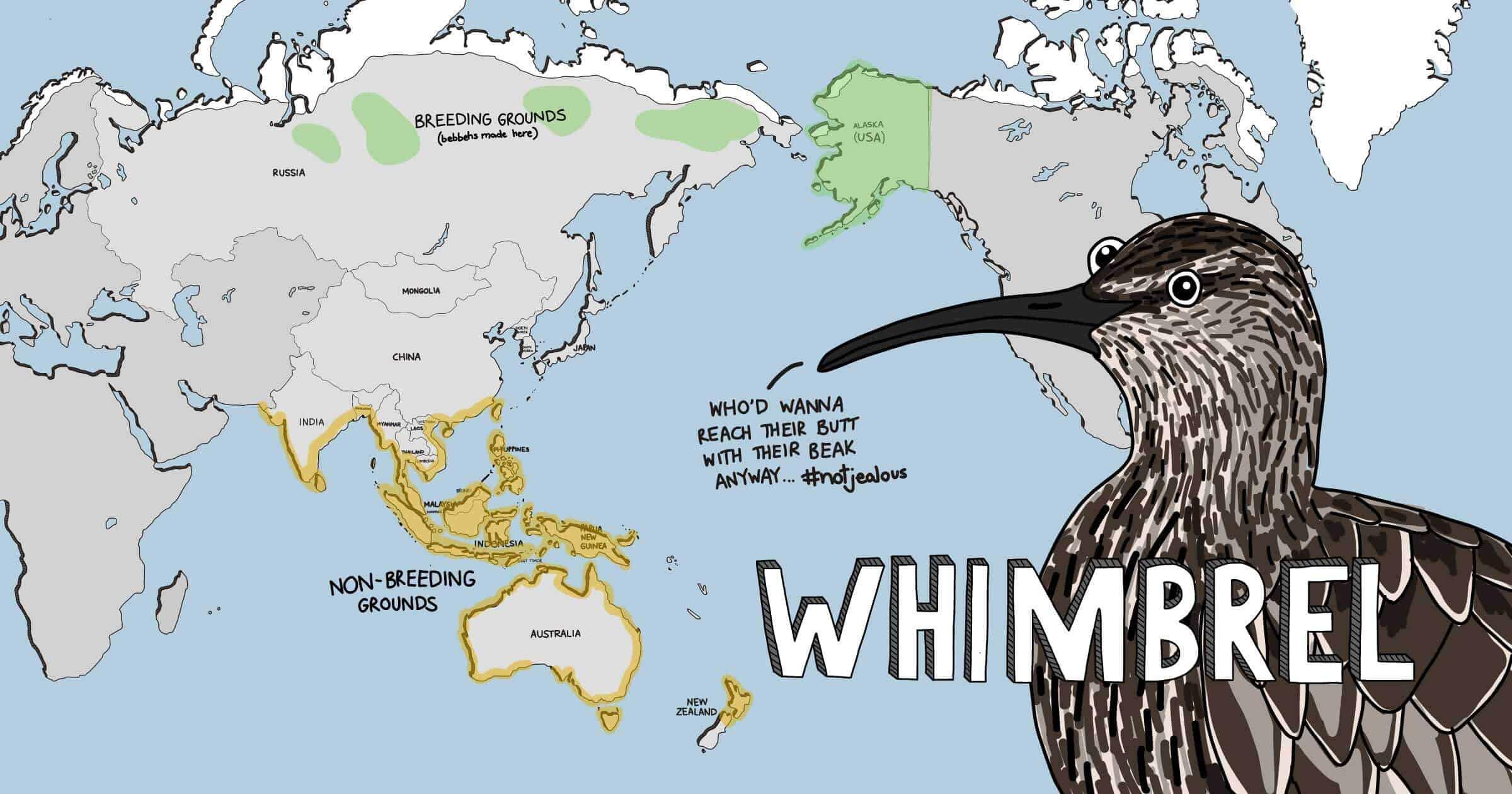 Meet The Shorebirds - Whimbrel map