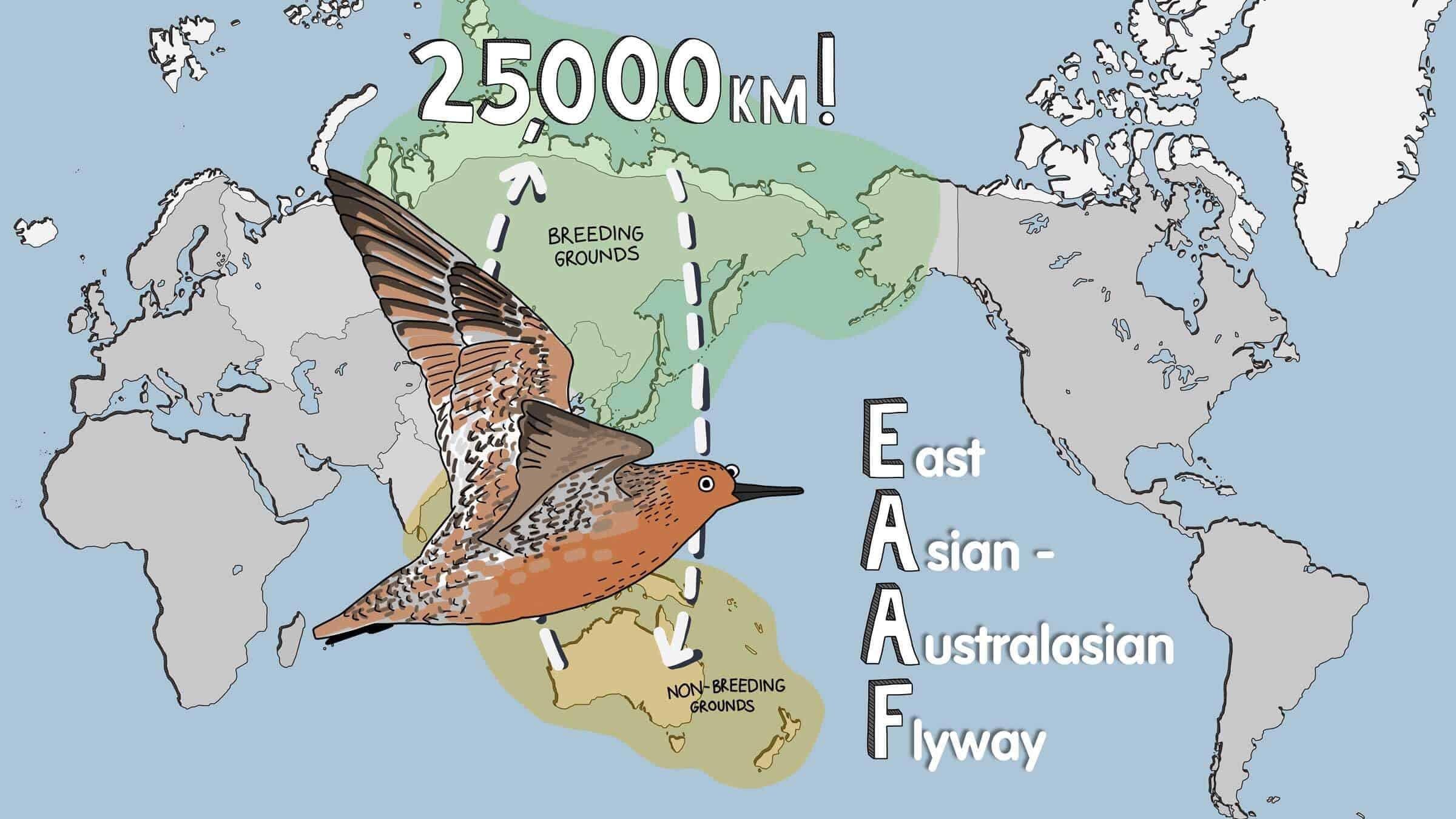 EAAF Migration Map