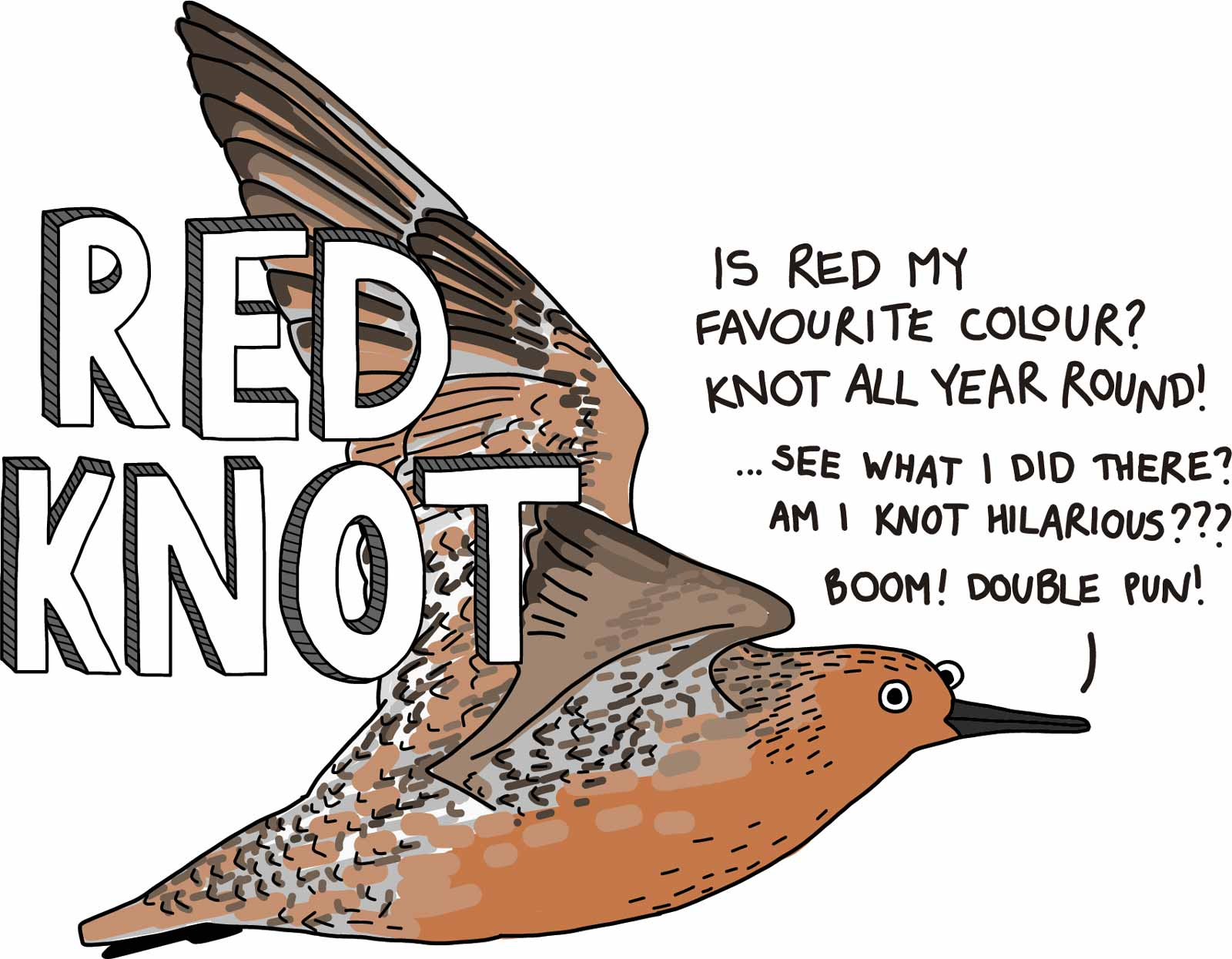 Cartoon of a red knot with block text