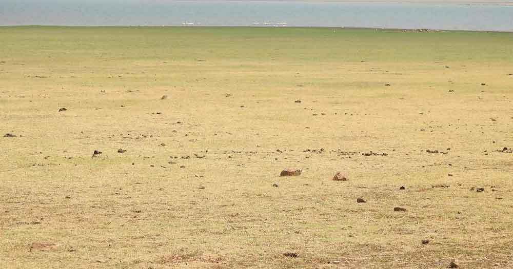 Dry gravelley ground OP nesting habitat
