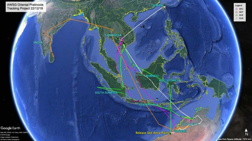 Map of migration paths of four satelite tagged Oriental Pratincoles from Australia to India, Cambodia and Taiwan, 22nd December
