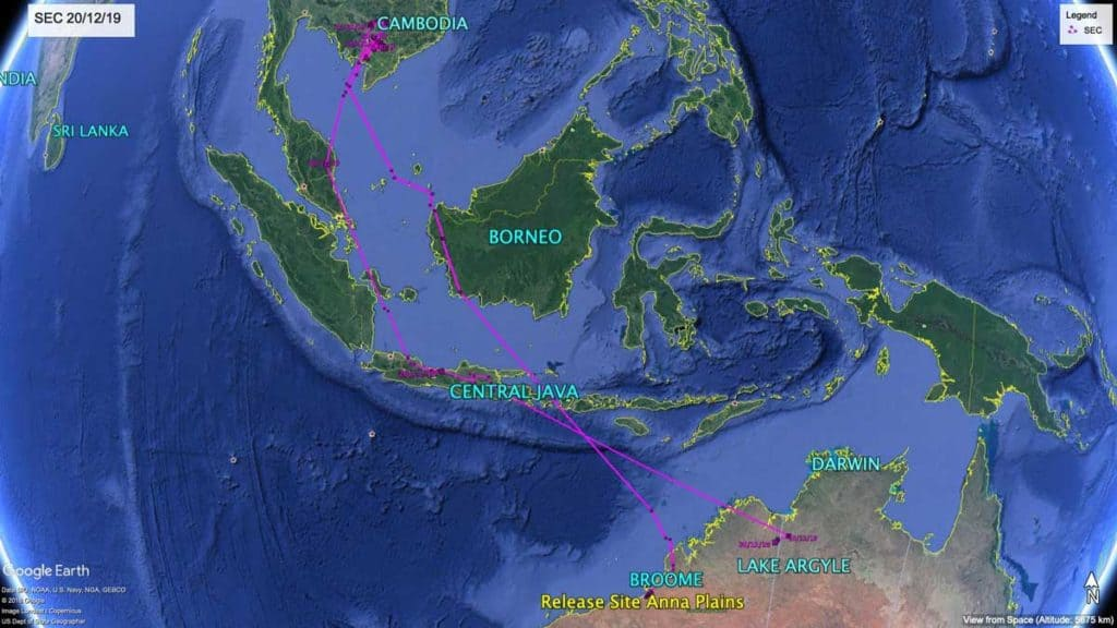 Map showing flight path of Oriental Pratincole, SEC, from Australia to Cambodia and back, 20th December 2019