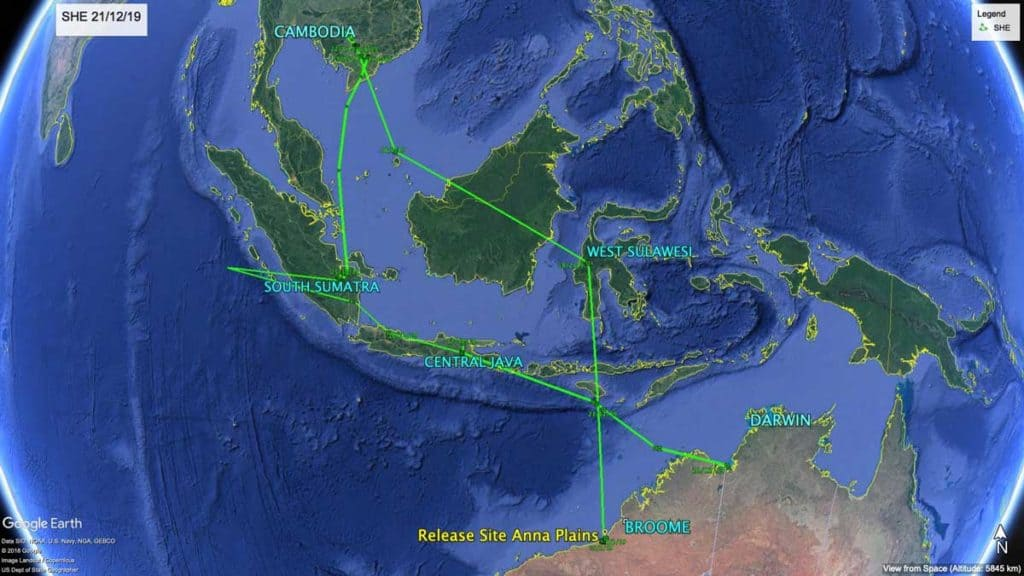 Map of migration path of Oriental Pratincole, SHE, from Central Jave to Australia, 21st December 2019
