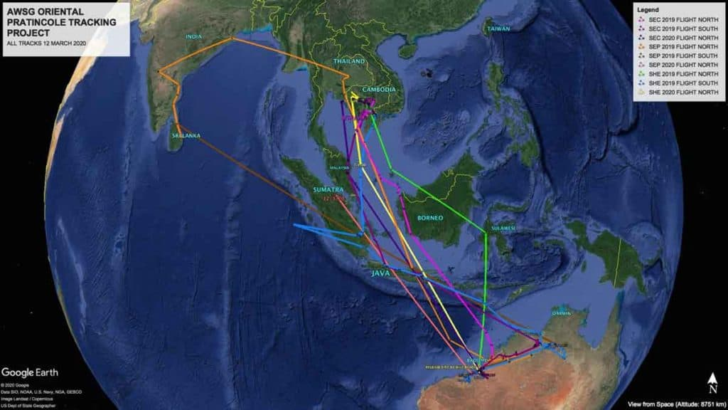 Google Earth map showing migration tracks of three oriental pratincoles between February 2019 and March 2020