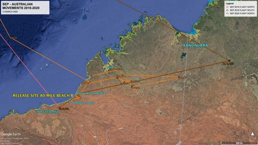 Map showing movements on Oriental Pratincole, SEP in Australia between 2019 and 2020