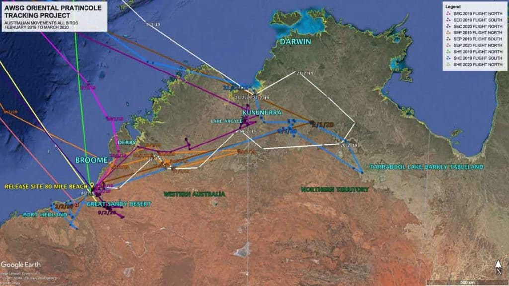 Map or northern Australia showing movements of Oriental Pratincoles fitted with satelilte tags between February 2019 to March 2020