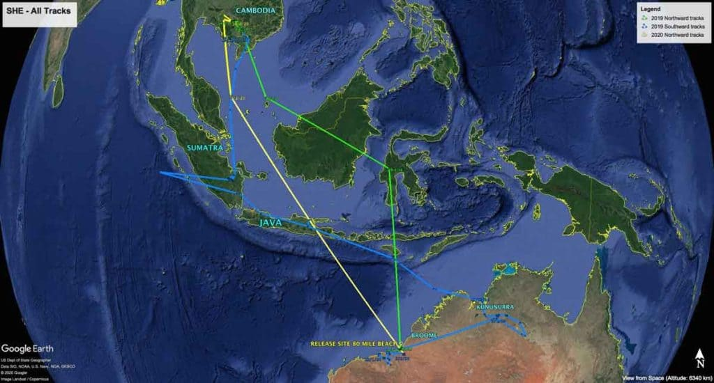 Map of all migration tracks of Oriental Pratincole, SHE, since being fitted with a satellite tag in February 2019