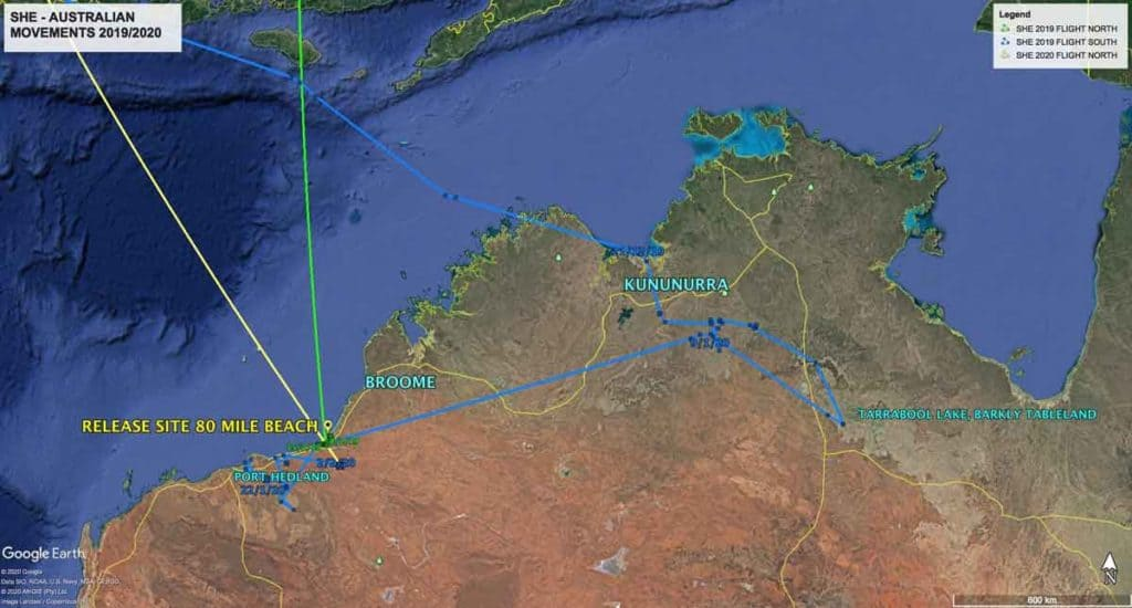 Map of Australian movements of Oriental Pratincole, SHE as of 21st December 2019