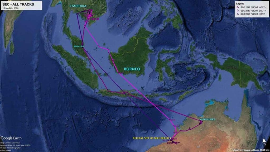 Map of northward and southward migration tracks of Oriental Pratincole, SEC, since being fitted with a satelllite transmitter in February 2019