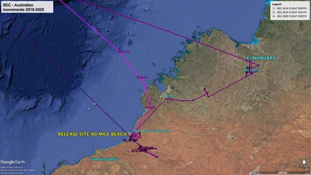 Map showing Australian movements of Oriental Pratincole, SEC, since returning to Australia in 2019 and departure in February 2020