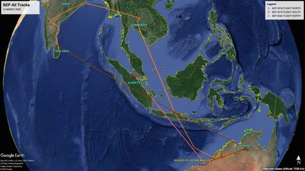Map showing all tracks of Oriental Pratincole, SEP, since being fitted with a satellite transmitter in February 2019