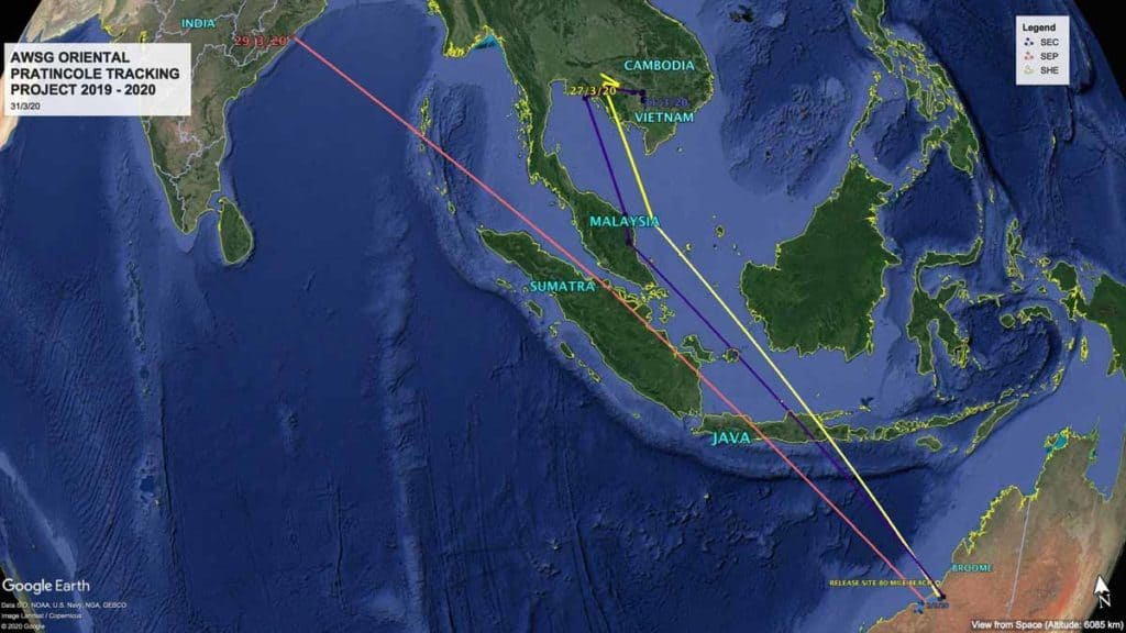 Map showing migration tracks of Oriental Pratincoles, SHE, SEC and SEP from Australia to India and Cambodia on 31st March
