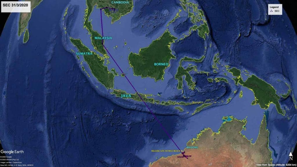 Map showing northward migration track of Oriental Pratincole, SEC, from Australia to Cambodia, 31st March, 2020