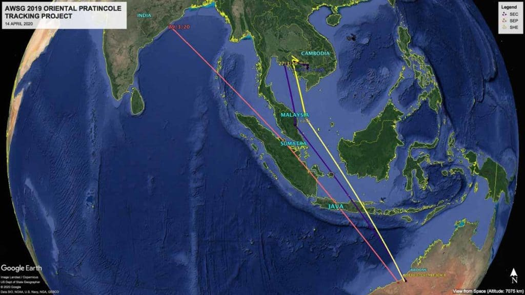 Migration tracks of three satellite-tagged Oriental Pratincoles from Broome to India and Cambodia