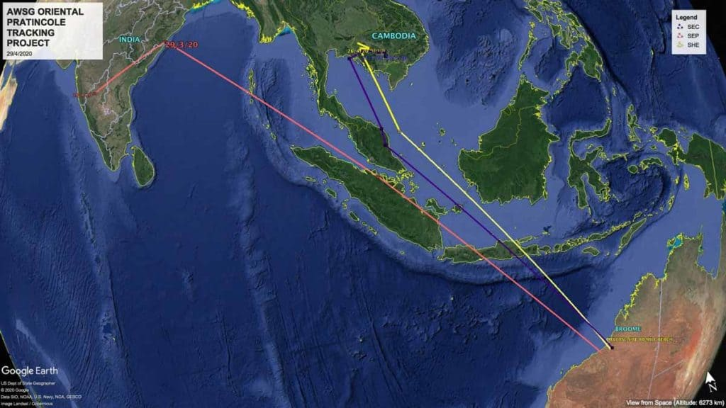 Map of migration tracks of three satellite-tagged Oriental Pratincoles from Broome to India and Cambodia