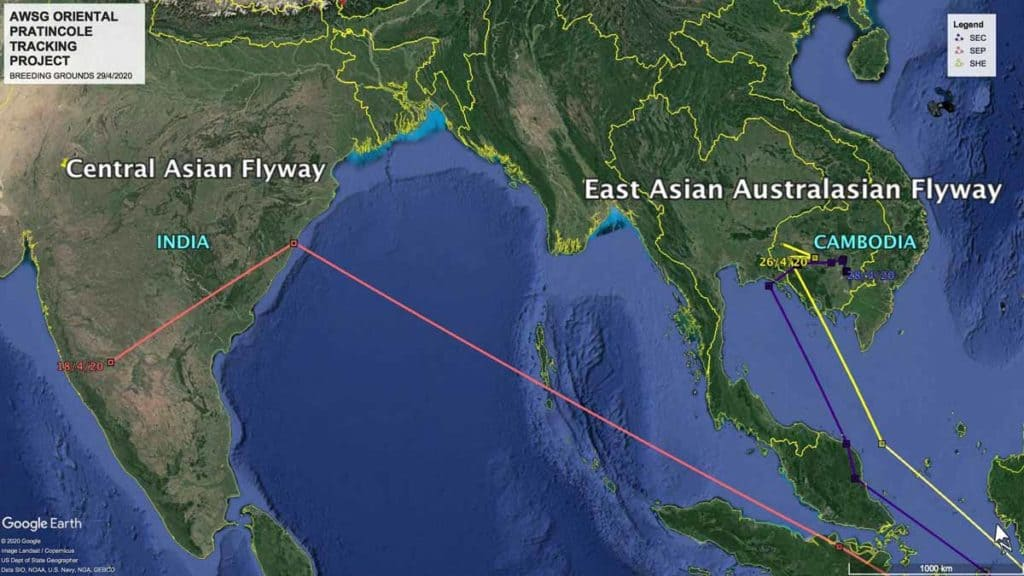 Map showing flight paths of three Oriental Pratincoles over the East Asian-Australasian and Central Asian Flyways