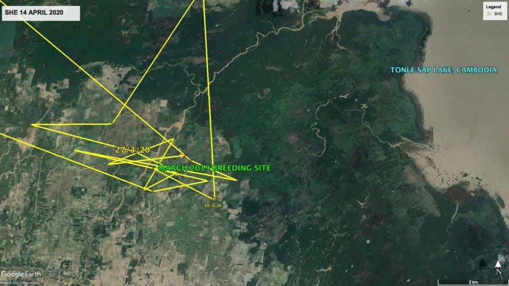 Map showing local movements of Oriental Pratincole, SHE, around floodplains in Cambodia