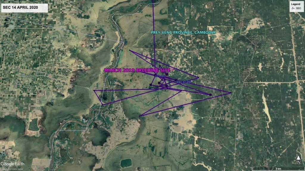 Map showing local movements of Oriental Pratincole, SEC, in Cambodia
