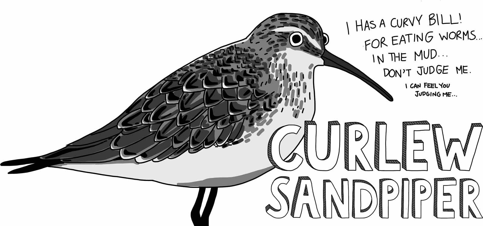 Cartoon of a curlew sandpiper