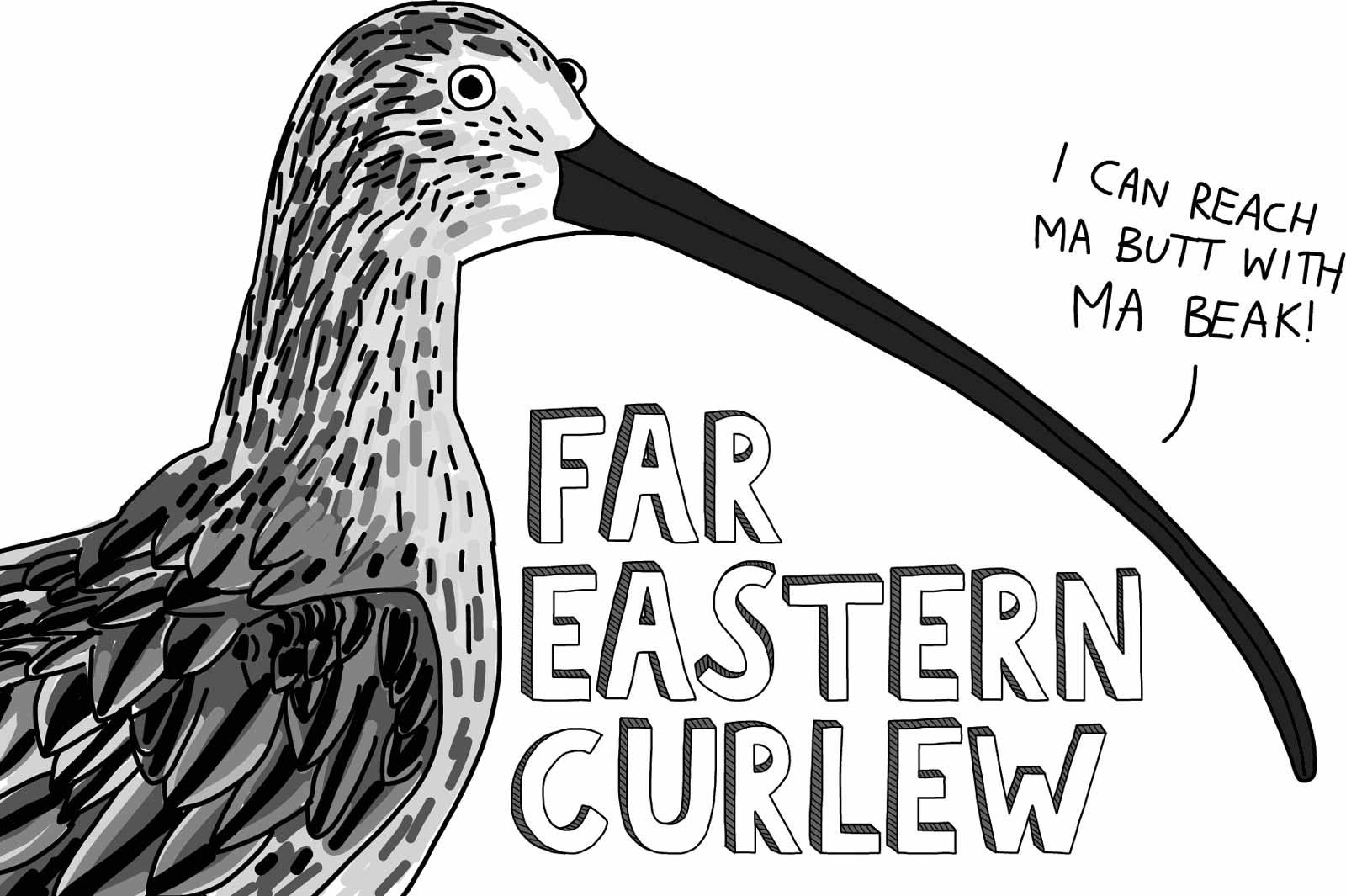 Cartoon of a far eastern curlew